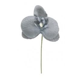 Orchidée grise sur tige les 6