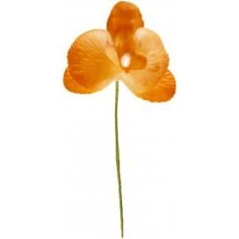 Orchidée orange sur tige les 6