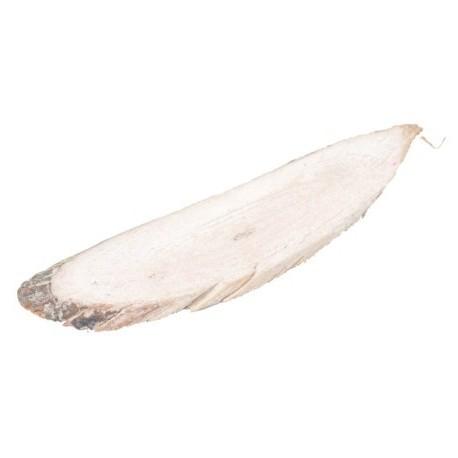 Languette de bois Blanche
