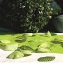 Pétales Vert Anis avec Feuilles Les 100