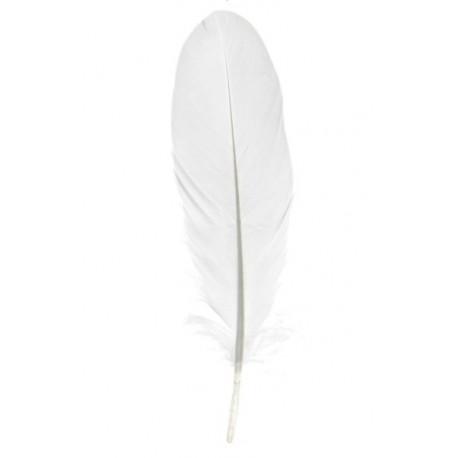 Plume blanche décorative 16 cm les 10