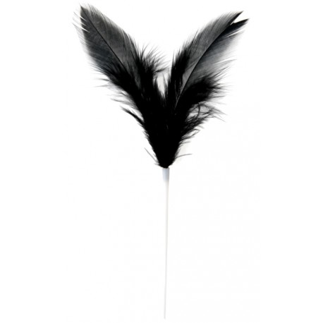 Pique plumes noires 8 x 14 cm les 12