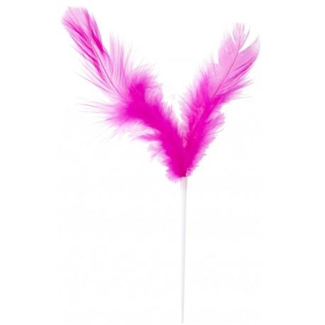 Pique plumes fuchsia 8 x 14 cm les 12