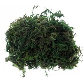 Mousse décorative verte 50 g