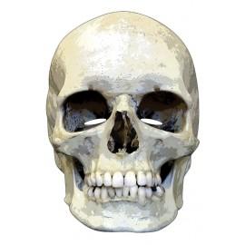 Masque carton squelette Halloween