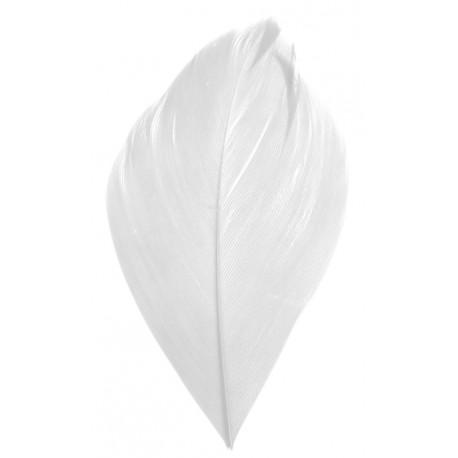 Plume blanche 6 cm les 100