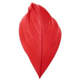 Plumes rouges 6 cm les 100
