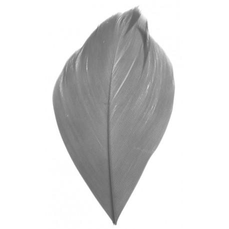 Plume grise 6 cm les 100