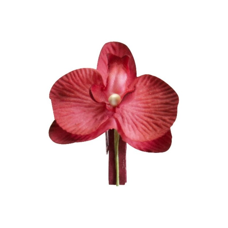 orchidee 6 lettres