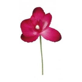 Orchidée fuchsia sur tige les 6